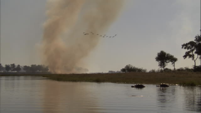 birds fly over hippos in a river and a column of smoke from a wildfire. available in hd. - natural column stock videos and b-roll footage