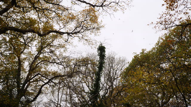 birds fly over oak woodland canopy - season stock videos & royalty-free footage