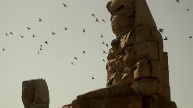 birds fly over the ancient colossi of memnon - monument stock videos & royalty-free footage