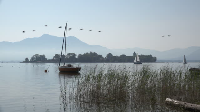 birds fly over the fraueninsel on lake chiemsee - bavarian alps stock videos & royalty-free footage