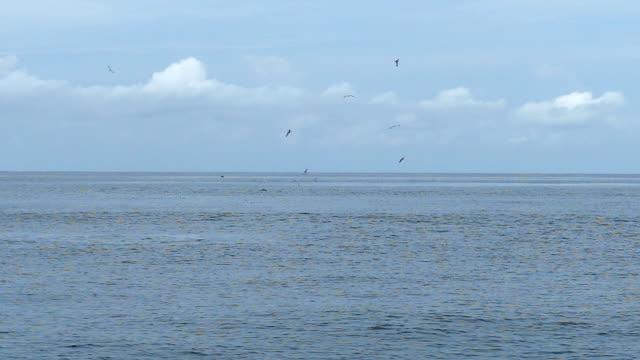 SLO MO/Vögel fliegen über das Meer