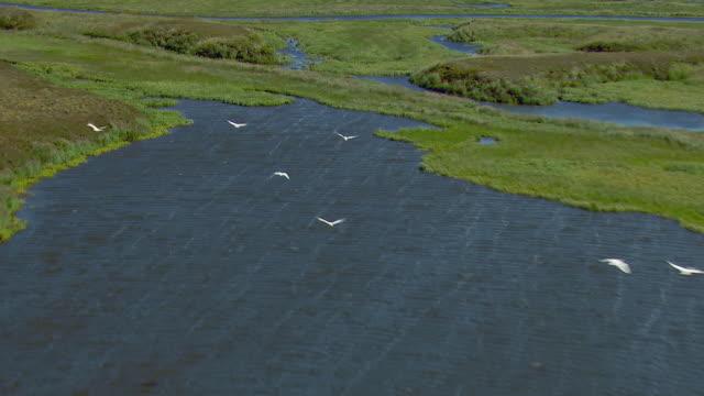 vidéos et rushes de birds fly over wetlands in western alaska - hémisphère nord