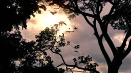 Birds Fly Past Sunrise In Jungle
