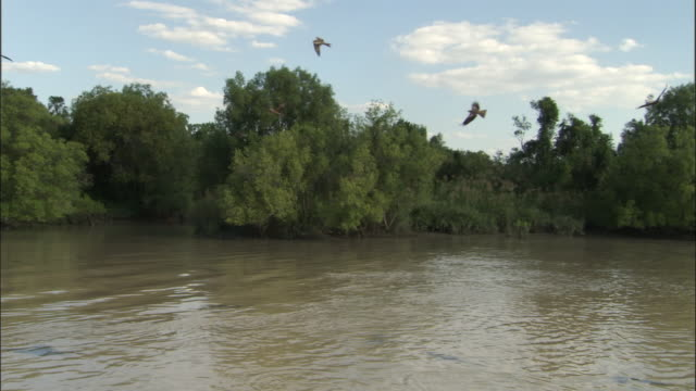 ws birds flying above adelaide river, northern territory, australia - adelaide river stock videos & royalty-free footage