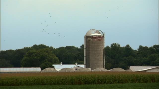 vidéos et rushes de ws birds flying above farm silo / queenstown, maryland, usa - silo