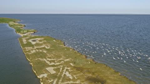 aerial vögel fliegen über einem küstennahen salzwiesen im sonnenschein - nordsee stock-videos und b-roll-filmmaterial