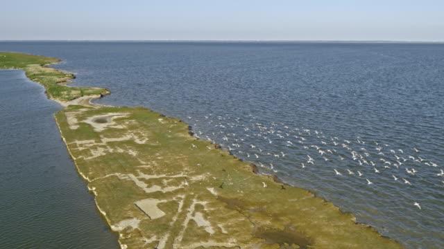 AERIAL Birds flying across a coastal saltmarsh in sunshine