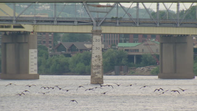 vidéos et rushes de birds flying across ohio river, cincinnati, ohio - rivière ohio