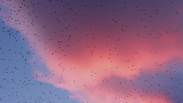 birds flying against the sky at dusk - herd stock videos & royalty-free footage
