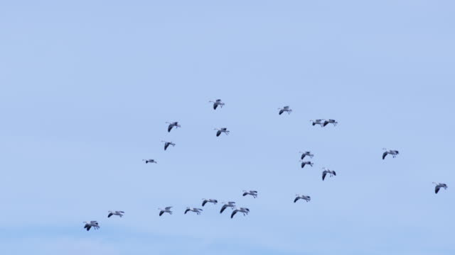Birds flying and landing in St. Lawrence River