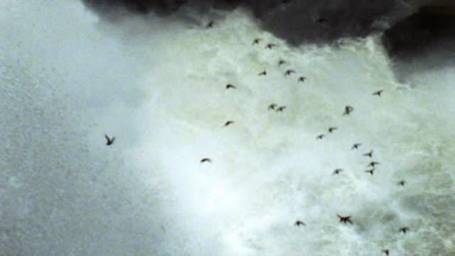vídeos de stock, filmes e b-roll de pássaros voando pelas cataratas do iguaçu em - região amazônica