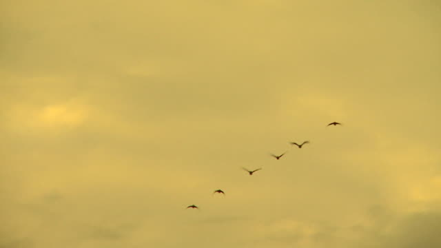 Birds flying in a line formation/ Lake Tanganyika/ Bujumbura/ Burundi