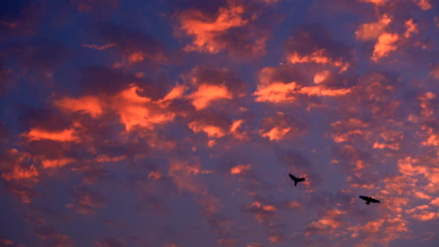 birds flying in a red sky at sunset - 2匹点の映像素材/bロール