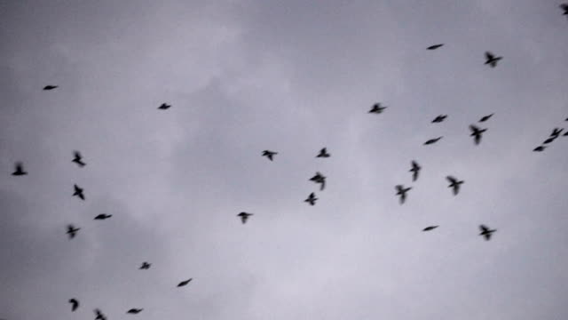 slomo - birds flying in cloudy sky - flock of birds stock videos & royalty-free footage