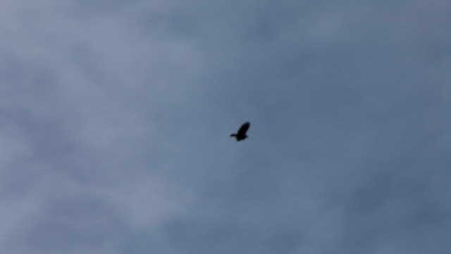 birds flying in sky - crow stock videos & royalty-free footage