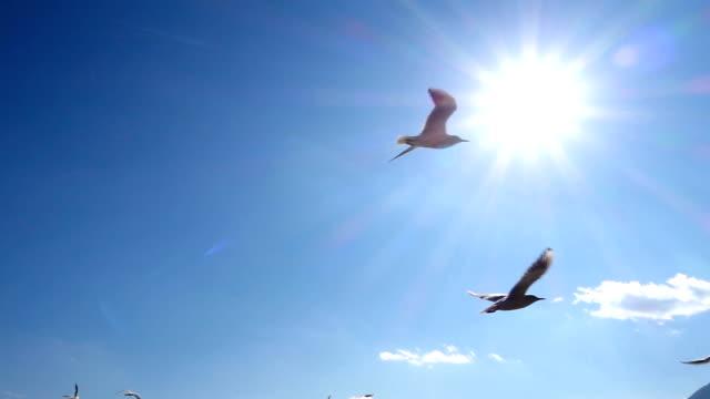 birds flying in sky - sea bird stock videos & royalty-free footage