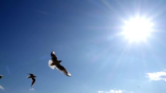 空飛ぶ鳥の - カモメ科点の映像素材/bロール