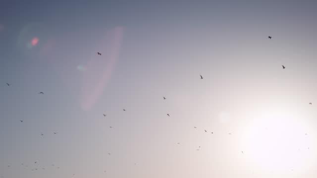 vídeos de stock, filmes e b-roll de pássaros voando ao pôr-do-sol - vista de ângulo baixo