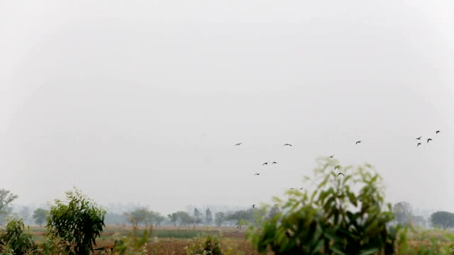 birds flying in the nature - birds flying in v formation stock videos and b-roll footage