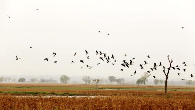 birds flying in der natur - teich stock-videos und b-roll-filmmaterial