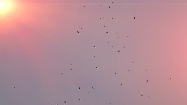 Vögel fliegen in den Himmel