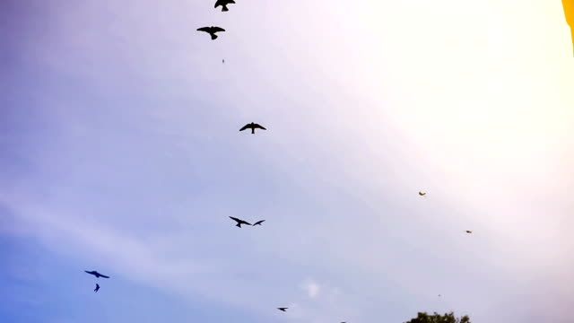 birds flying in the sky - birds flying in v formation stock videos and b-roll footage