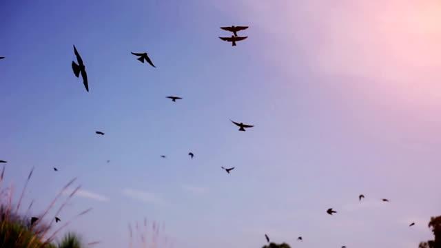 空に飛ぶ鳥 - 雁点の映像素材/bロール