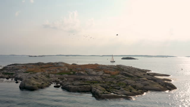 birds flying over a small island - svezia video stock e b–roll