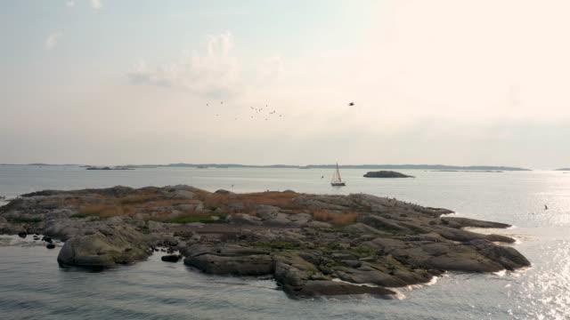 vögel fliegen über eine kleine insel - sweden stock-videos und b-roll-filmmaterial