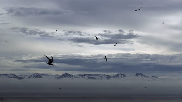 Birds flying over cold sea catching fish. Rocky shore covered with snow.