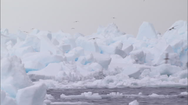 birds flying over glacier in the north pole - crushed ice stock videos & royalty-free footage