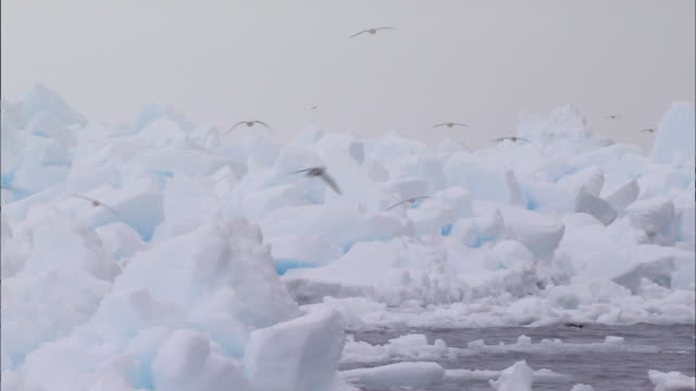 vidéos et rushes de birds flying over glacier in the north pole - iceberg bloc de glace
