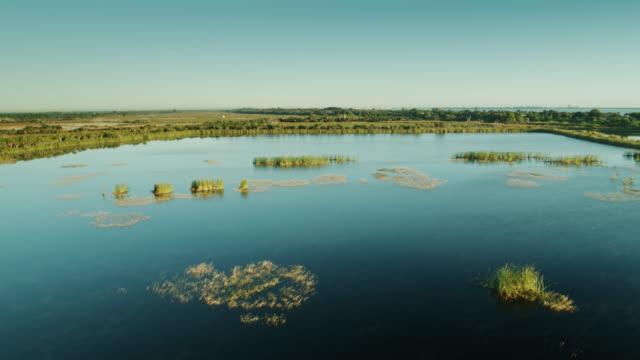 フロリダ州サバンナスレクリエーションエリアのラグーンの上を飛ぶ鳥 - 湿地点の映像素材/bロール