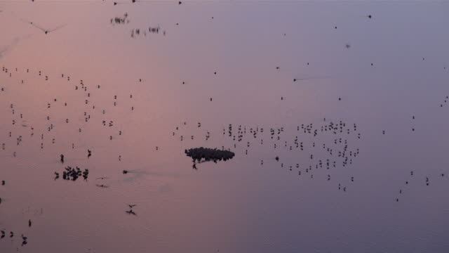 MS Birds flying over lake nakuru in early morning light AUDIO / Nakuru, Rift Valley, Kenya