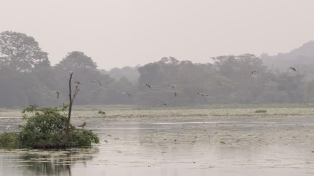 ms 鳥沼、スリランカの上を飛んで - ネイチャーズウィンドウ点の映像素材/bロール