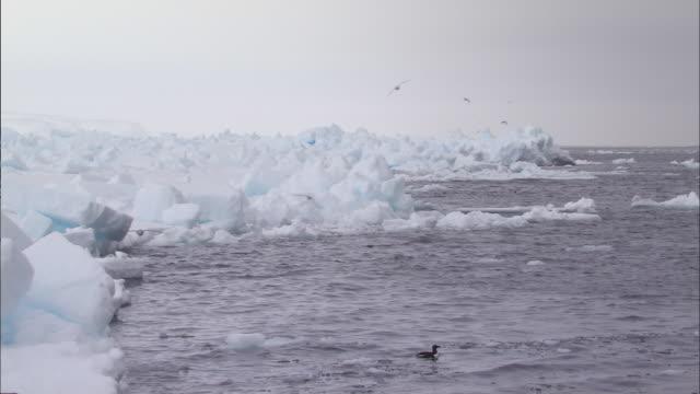vidéos et rushes de birds flying over melting glacier in the north pole - iceberg bloc de glace