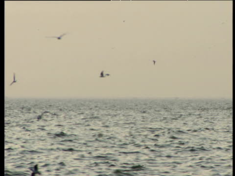 birds flying over sea and trawler sailing - thessalonika stock videos & royalty-free footage