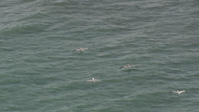 MS AERIAL TS Birds flying over sea / North Carolina, United States