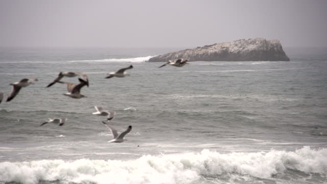 Birds flying over the ocean in slow motion
