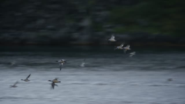 birds flying over the tidal current saltstraumen in bodø, norway - sea life stock videos & royalty-free footage