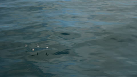 birds flying over water surface - small group of animals stock videos & royalty-free footage