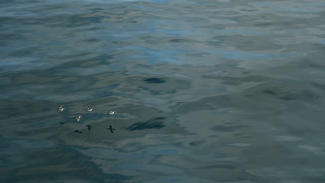 birds flying over water surface - piccolo gruppo di animali video stock e b–roll