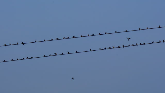 birds flying to the wire - steel cable stock videos & royalty-free footage