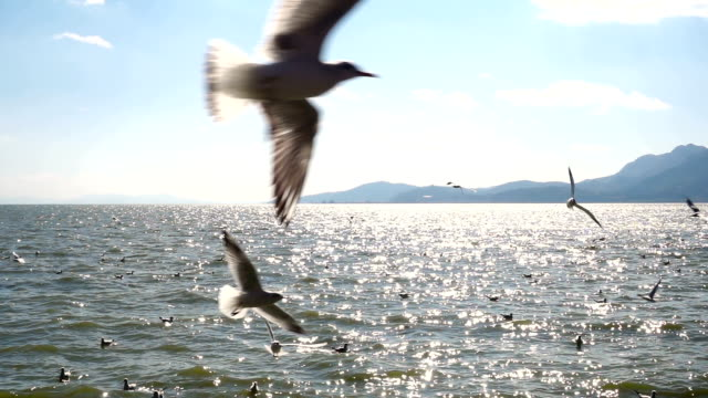 birds flying - pacific ocean stock videos & royalty-free footage