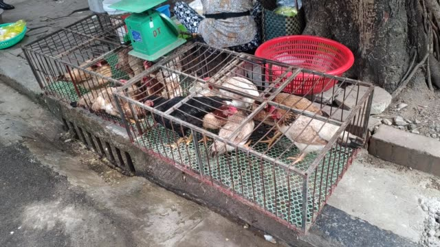 birds for sale at wet market - chinese culture stock videos & royalty-free footage