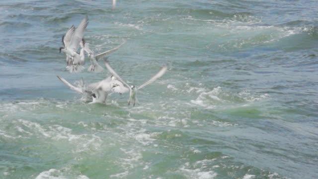 Birds Hunting : HD Slom motion