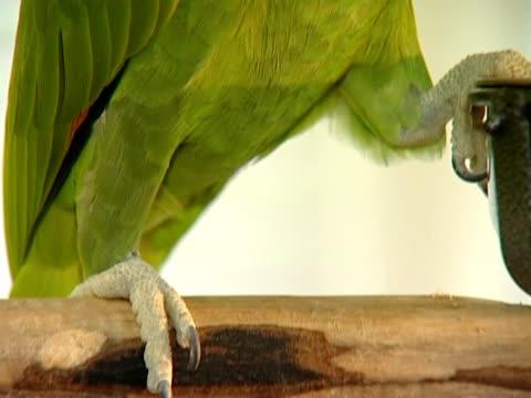 vögel in einem käfig und im liberty. - sado maso stock-videos und b-roll-filmmaterial