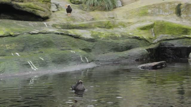 birds in artificial habitat (2) - water bird stock videos & royalty-free footage