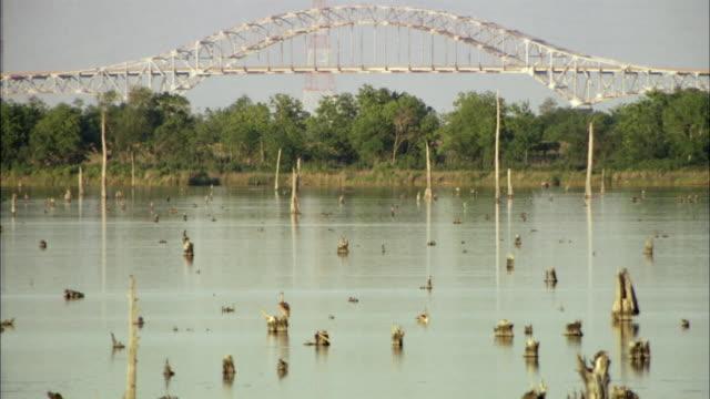 ws birds in bayou, suspension bridge in background / new orleans, louisiana, usa - baumstumpf stock-videos und b-roll-filmmaterial