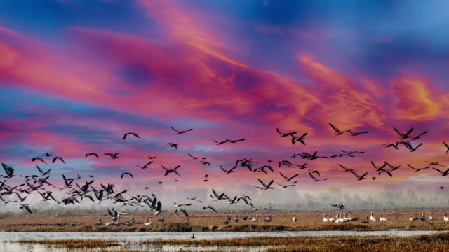 birds in lake under the beautiful cloudscape - flapping wings stock videos & royalty-free footage